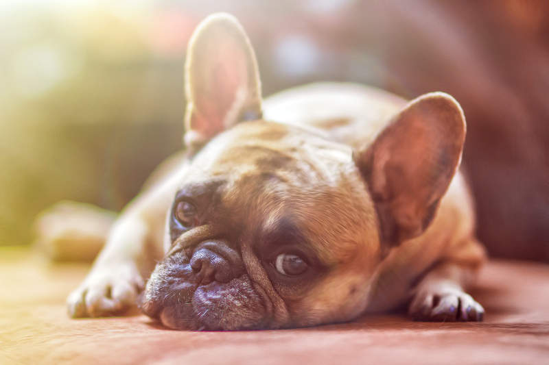 dog friendly caravans travelling with your pet
