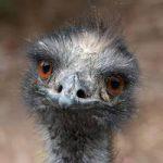 Emu Caravan Repairs Testimonial